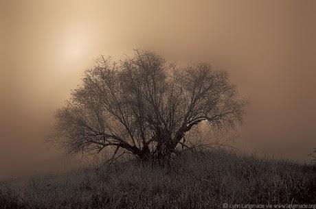tree_fog