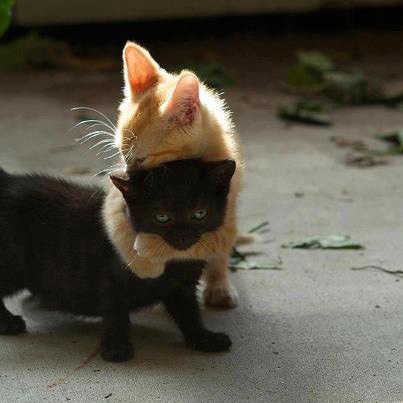 hugging_cats