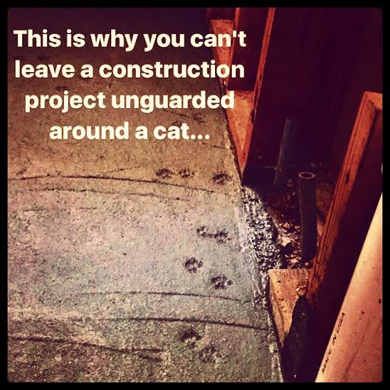 construction-cats